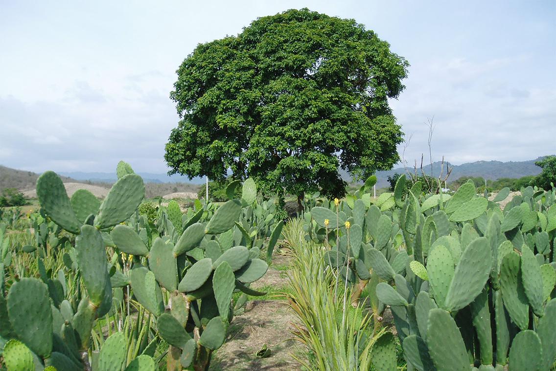 Im Vordergrund sind Kakteen und Aloe Vera Pflanzen und mittig im Hintergrund ein großer Baum