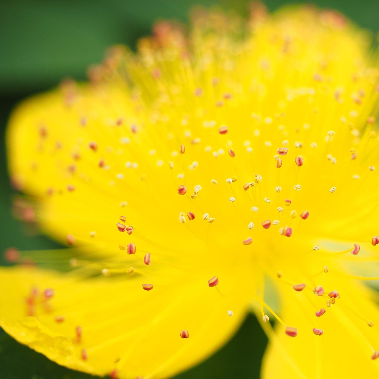 Nahaufnahme gelbe Blumen