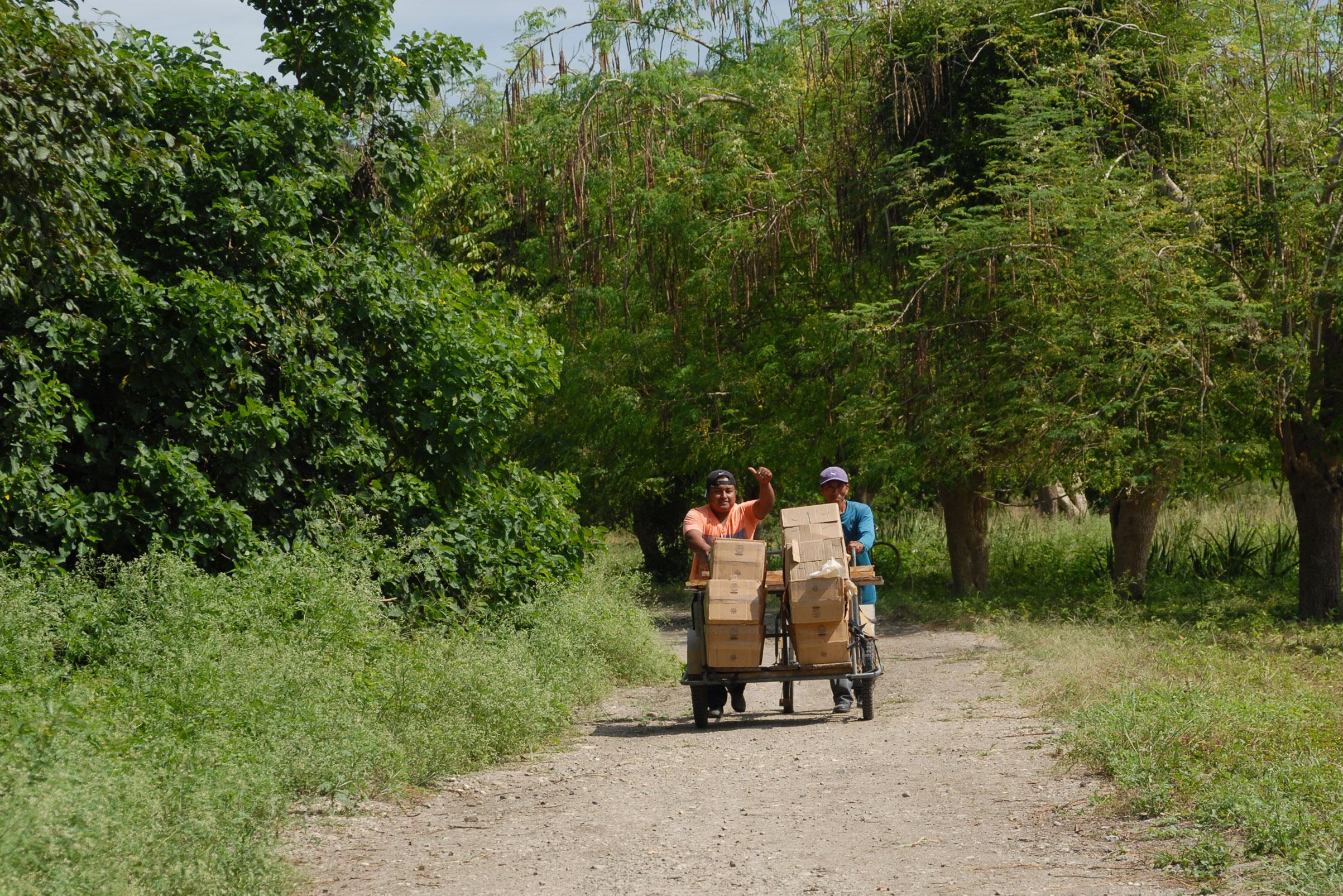 Die Kleinbauern liefern mit einem Fahrrad die Aloe Vera