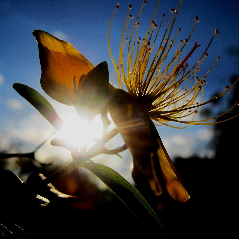 gelbe Blume mit Sonneneinstrahlung und Himmel im Hintergrund