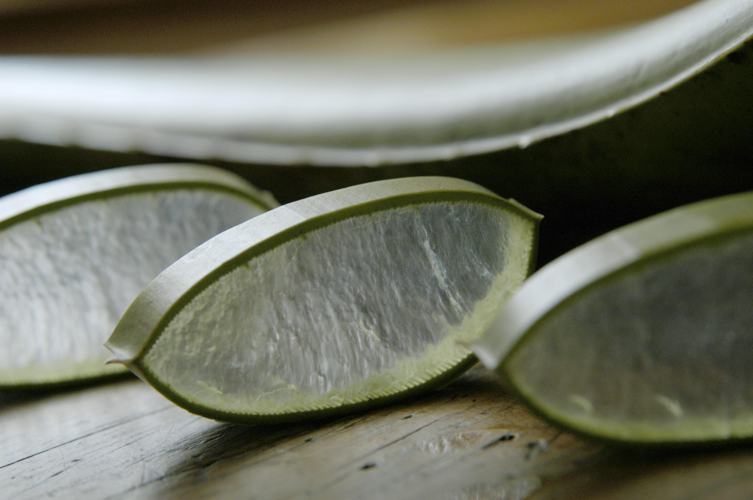 Drei Aloe Vera Scheiben vor Aloe Vera Blatt auf Holztisch