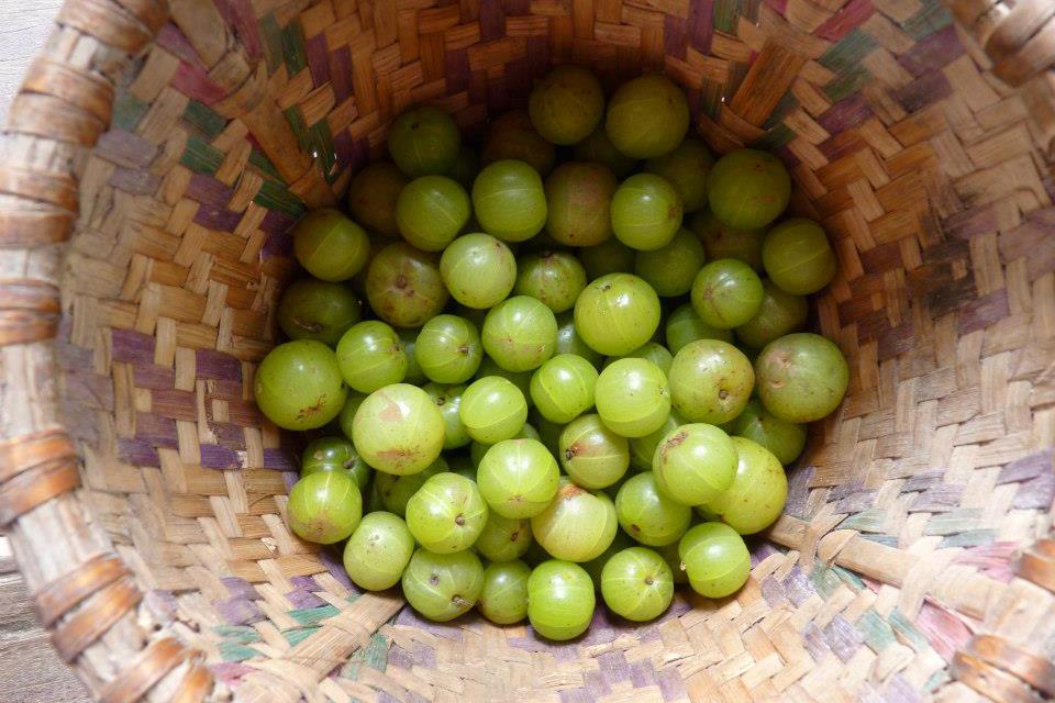 Grüne runde Nelli Früchte in braunem Korb