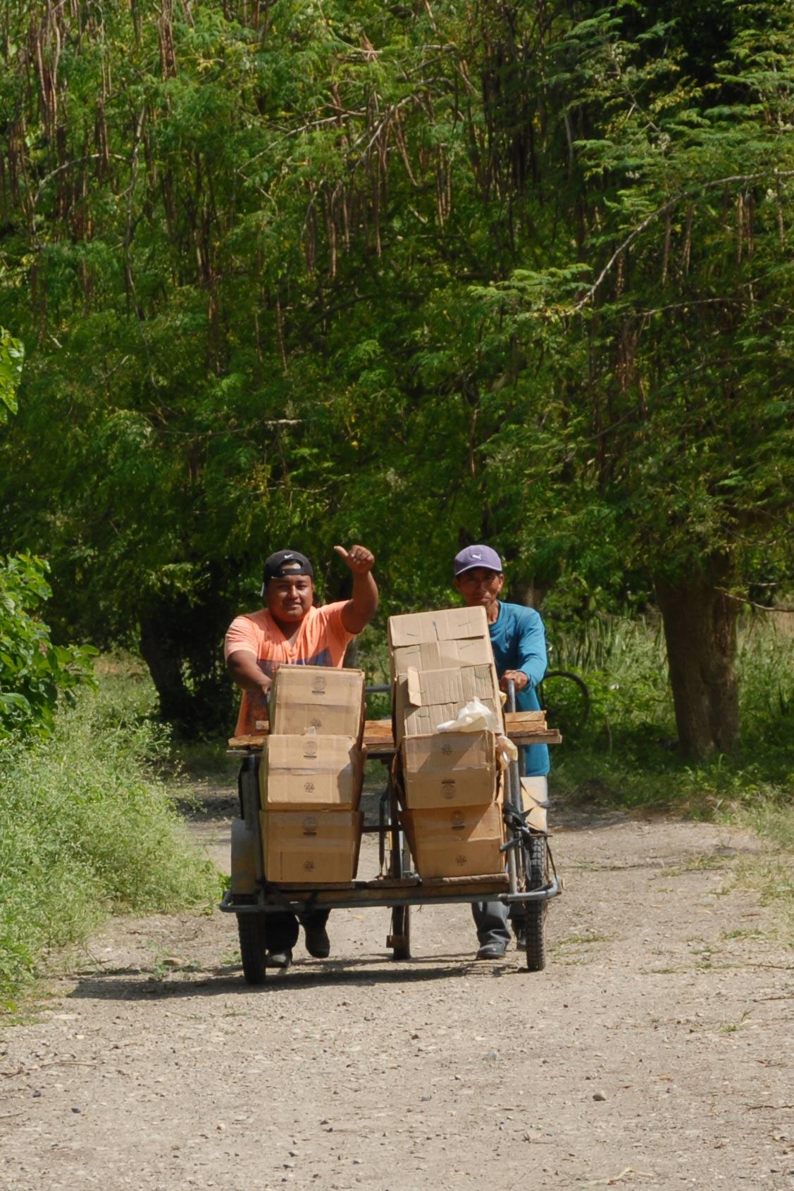 2 Feldarbeiter transportieren die geernteten und in Kartons verpackte Aloe-Blätter auf einer Sackkarre von der Plantange