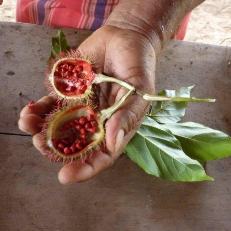 Eine Hand zeigt eine rote halbierte Achiote