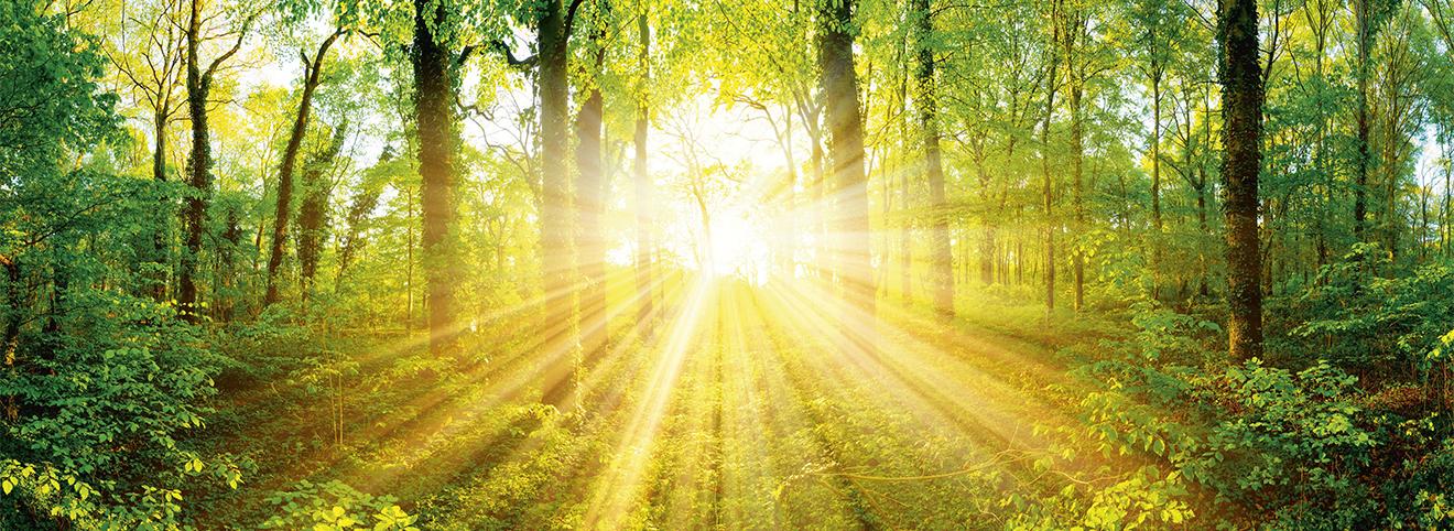 iele Lichtstrahlen der Sonne strahlen mitten durch eine Waldlandschaft