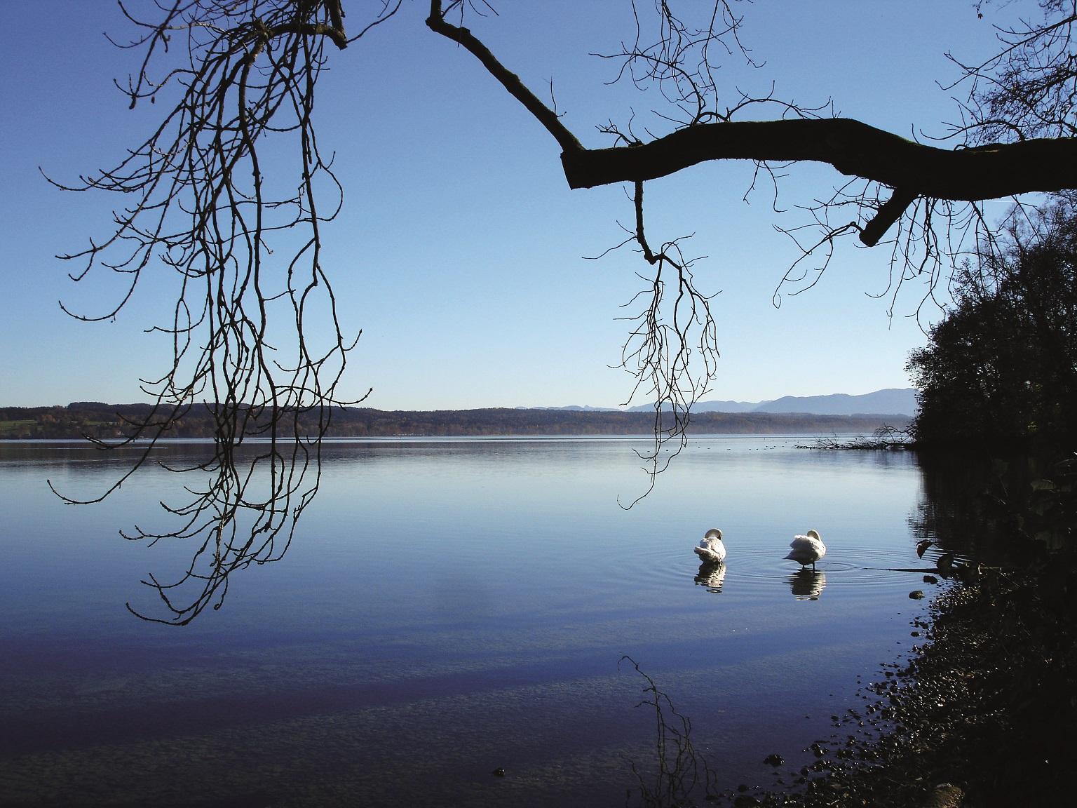 Der Starnberger See in Bernried, mit Schwänen