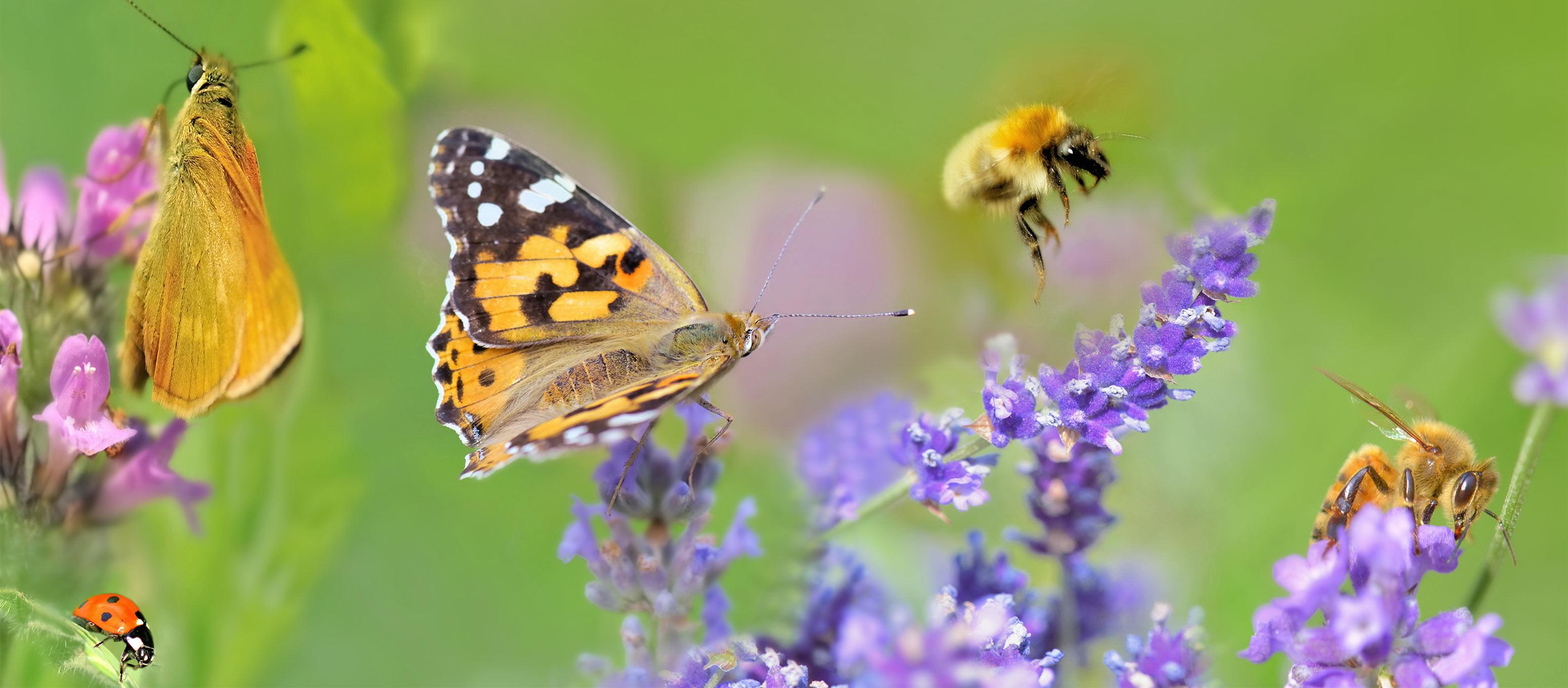 Verschieden Insekten und Pflanzen auf einem Bild