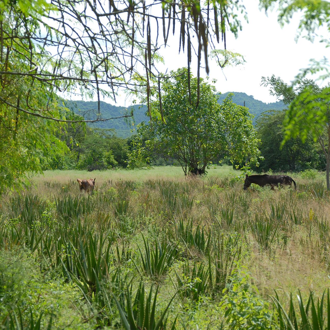 Grüne Landschaft Mischkultur mit dunklen Pferden